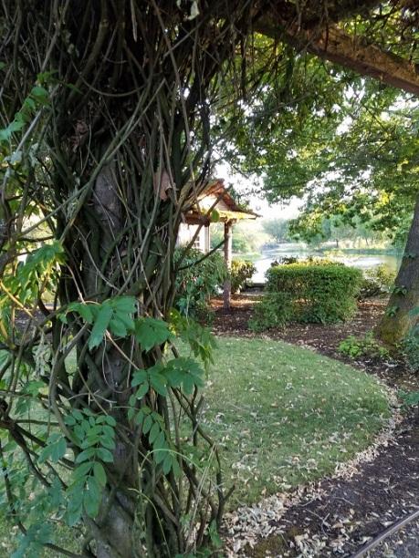japanese gardens 13 - (peg)