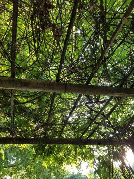 japanese gardens 14 - (peg)