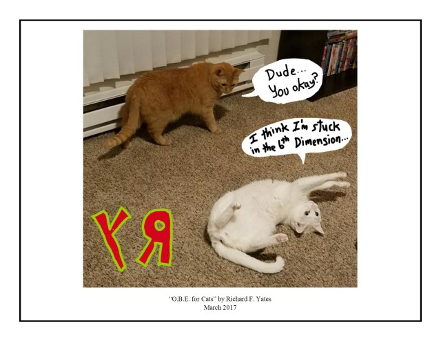 O.B.E. for Cats